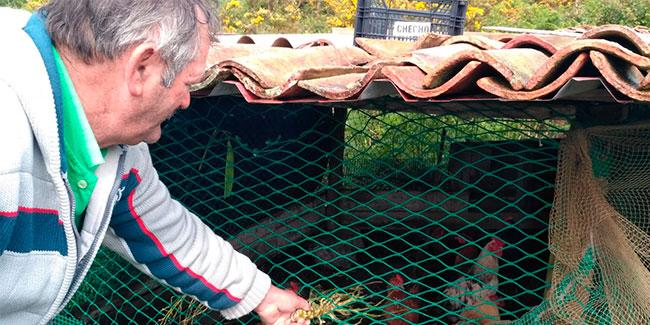 Pepe de Miro alimentando a sus gallinas