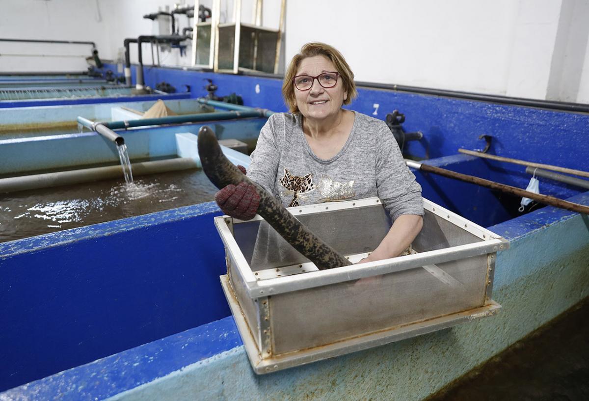 Chelo Fernández, en su vivero de Tomiño con una lamprea.